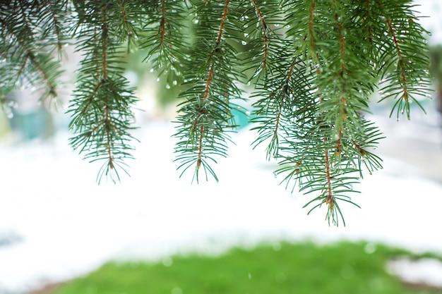 Groene kerstbomen in een winter park bedekt met sneeuw