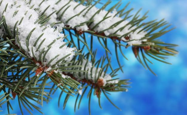 Groene kerstboom op blauw
