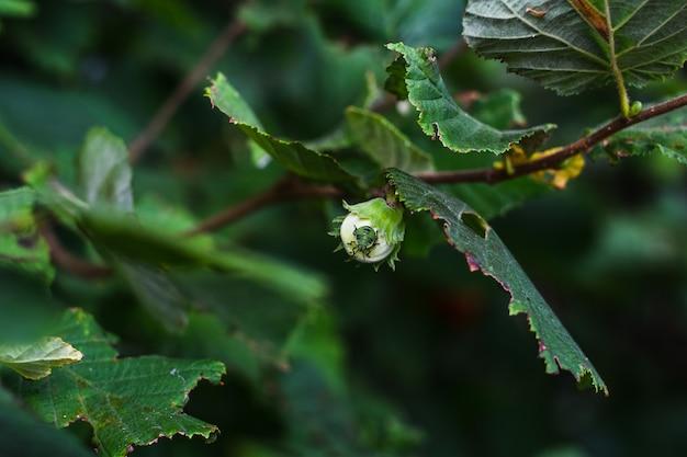 Groene kever op een groen blad van een boom