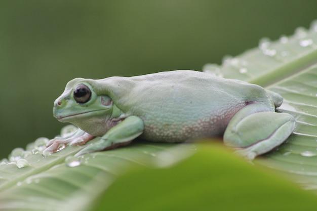 Groene kikkers op de bladeren