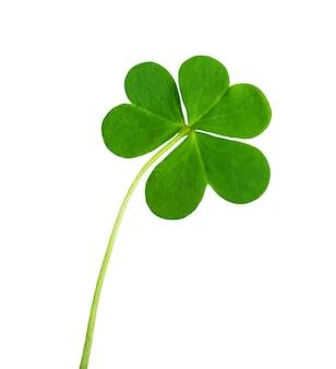 Groene klaver symbool van een st patrick dag op wit wordt geïsoleerd