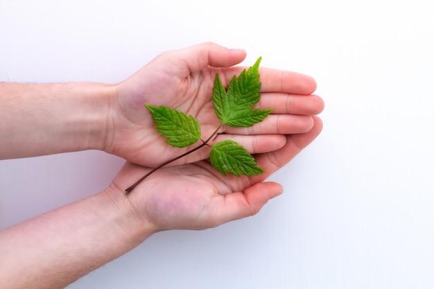 Groene kleine tak in de handen. milieubescherming en ecologische zorg