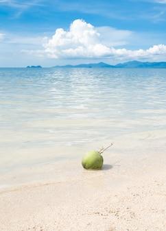 Groene kokosnoot op wit strandzand