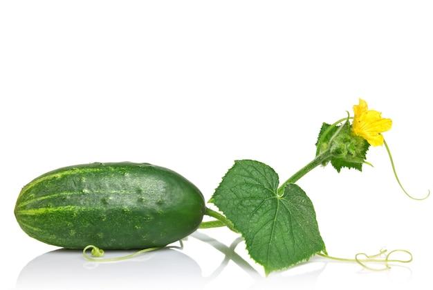 Groene komkommer met bladeren en bloem geïsoleerd op wit