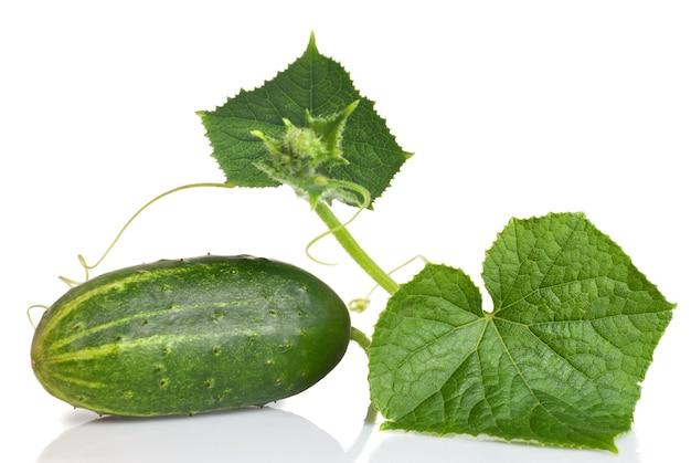 Groene komkommer met bladeren geïsoleerd op wit