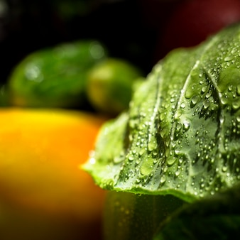 Groene kool blad close-up
