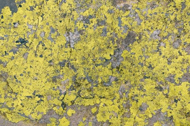 Groene korstmos textrure op grijze steenachtergrond