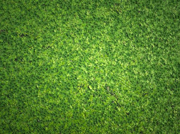 Groene kroos natuurlijke groene achtergrond.