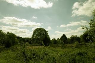 Groene landschap, bos