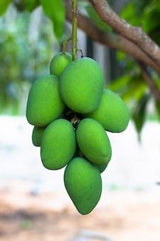Groene mango met witte achtergrond met het knippen van weg
