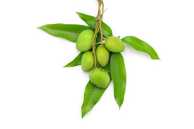 Groene mango's worden op mangobladeren geplaatst die op witte achtergrond worden geïsoleerd.
