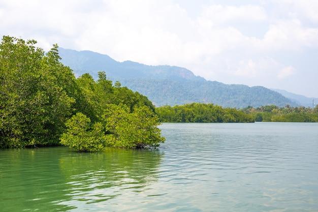 Groene mangroven gebogen over de rivier in de tropen van azië tegen de achtergrond van bergen