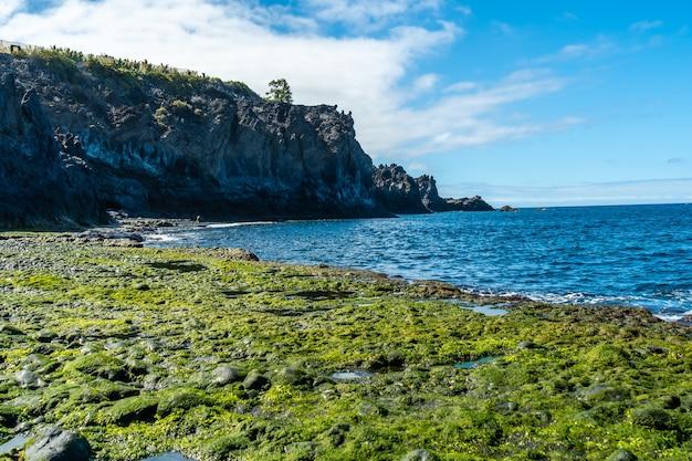Groene mariene vegetatie aan zee op het strand van charco verde op het eiland la palma in de zomer. canarische eilanden spanje