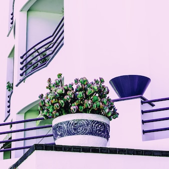 Groene minnaar. planten. minimale vibes