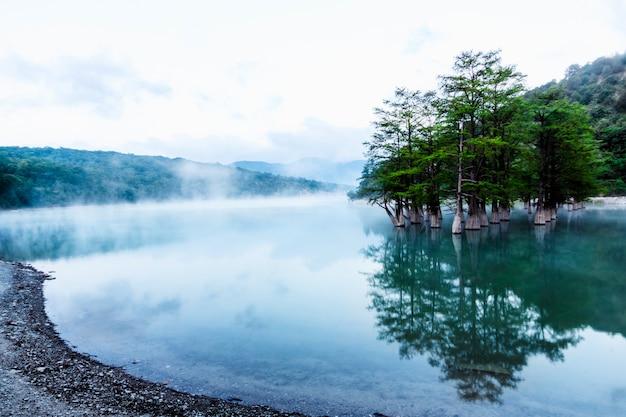 Groene moerascipressen staan in de vroege ochtend in het water van een bergmeer en worden daarin weerspiegeld. stoom verspreidt zich over het water.