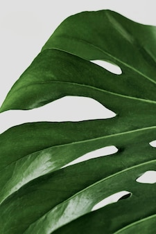 Groene monstera-bladachtergrond met ontwerpruimte Gratis Foto