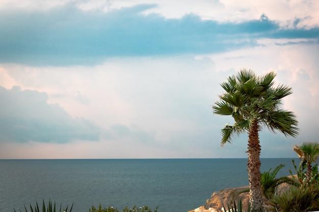 Groene mooie palmboom op blauwe achtergrond