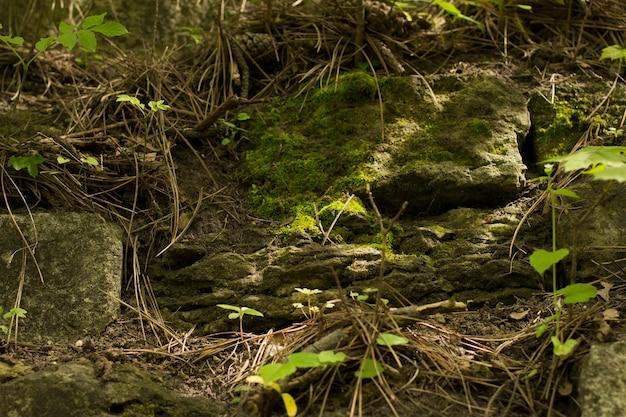 Groene mos bedekte steen in het bos. close-up shot