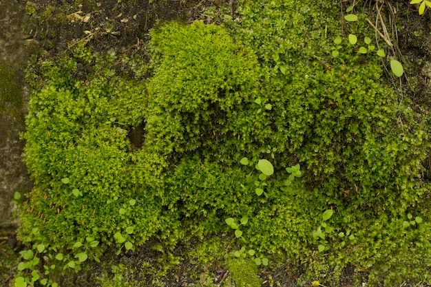 Groene mos en met gras bedekte steen in het bos