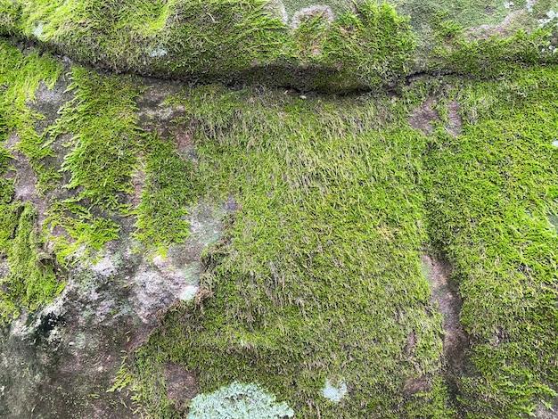 Groene mos textuur en achtergrond