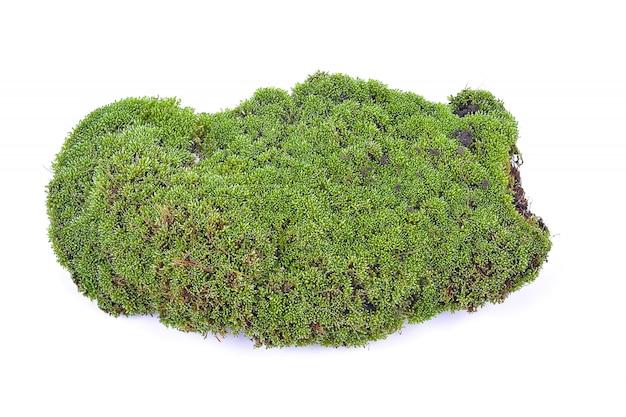 Groene mos