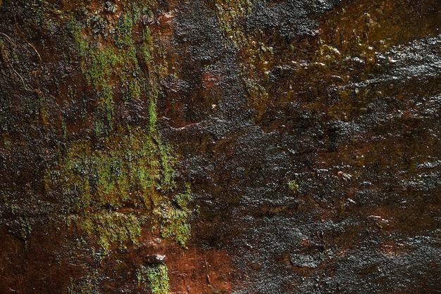 Groene mosachtergrond