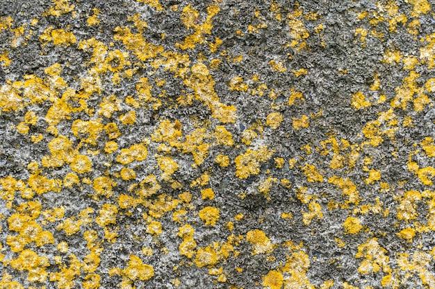 Groene mosplanten op de rots zijn handig als achtergrond.