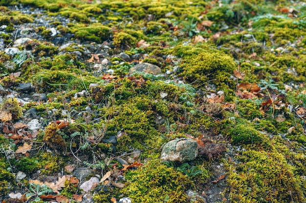 Groene mostextuur als achtergrond in een hout