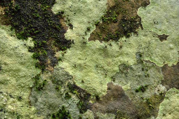 Groene mostextuur in aard