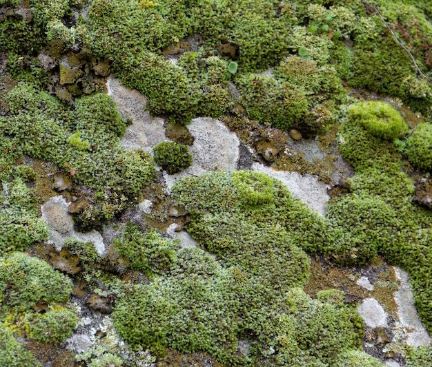 Groene mostextuur op grijze steen. organische achtergrond.
