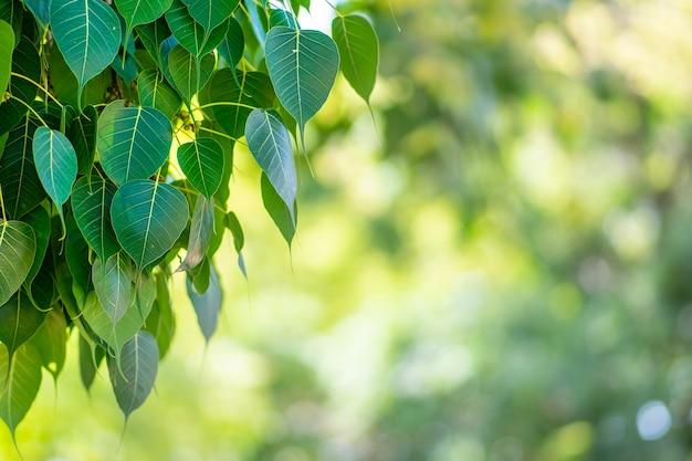 Groene natuur boom achtergrond