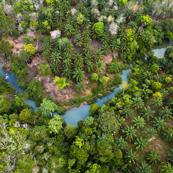Groene natuur in de groene bossen van sumatra indonesië en fris uit de lucht
