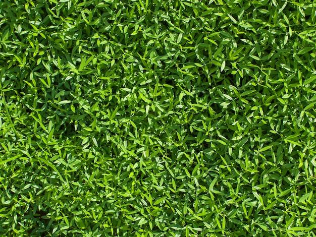 Groene natuur textuur