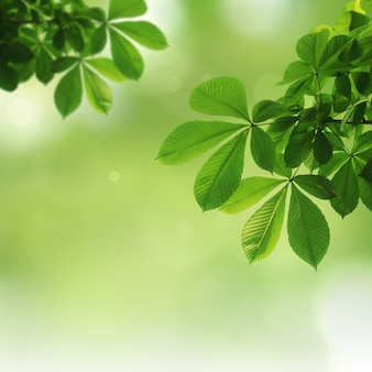 Groene natuurlijke achtergrond, groenachtergrond
