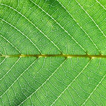 Groene natuurlijke achtergrond van een blad met nerven. macrofoto, creatieve lay-out. plat leggen