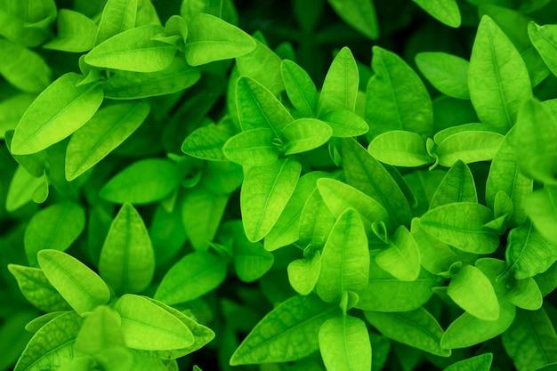 Groene natuurlijke achtergrond van planten, bovenaanzicht