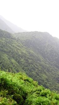 Groene open plek in een bergdal op zonnige dag