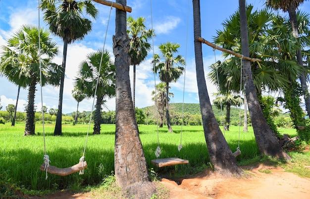 Groene padieveld en houten schommels die op palmen hangen