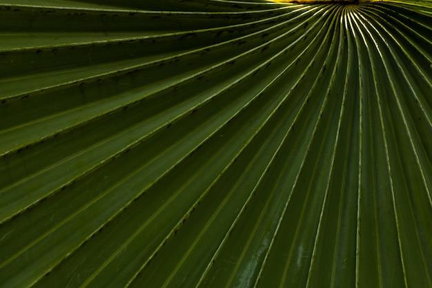Groene palmblad close-uo achtergrond