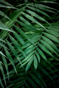 Groene palmbladen op zwart