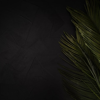 Groene palmbladen op zwarte geweven achtergrond met exemplaarruimte.