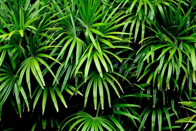 Groene palmbladenpatronen in regenwoud - licht en schaduw