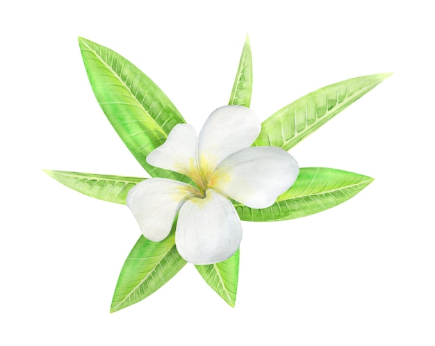 Groene palmbladeren en bloemenboeket