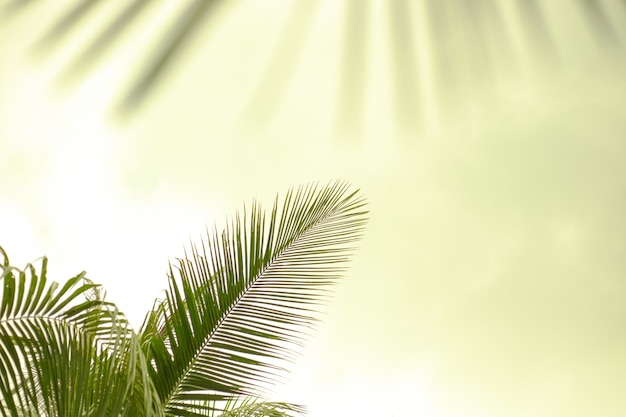 Groene palmbladeren op een lichtgroene achtergrond