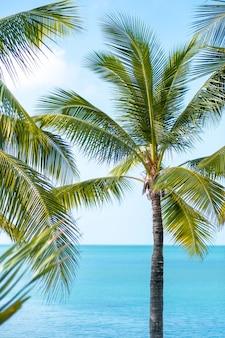 Groene palmbomen en blauwe hemel met wolken