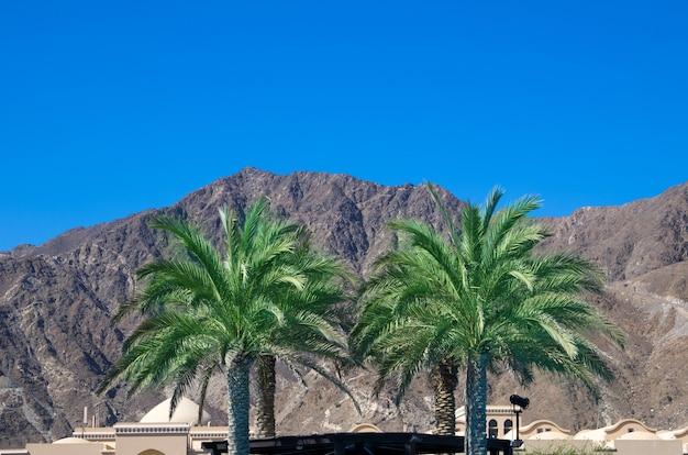 Groene palmboom op blauwe hemel