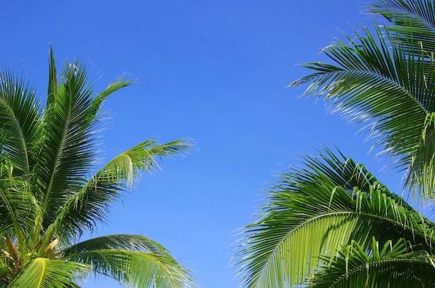 Groene palmboom op blauwe hemelachtergrond
