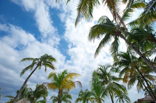 Groene palmboom