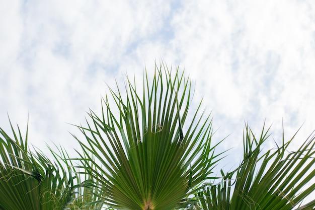 Groene palmtak in de lucht, vers exotisch boomblad, paradijsstrand, zomervakantie en vakantieconcept holiday