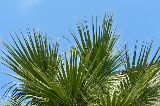 Groene palmtakken tegen de blauwe lucht